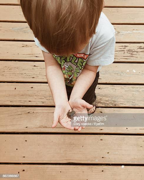 High Angle View Of Boy Holding Frog