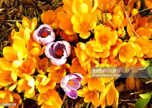 High angle view of bright flowers