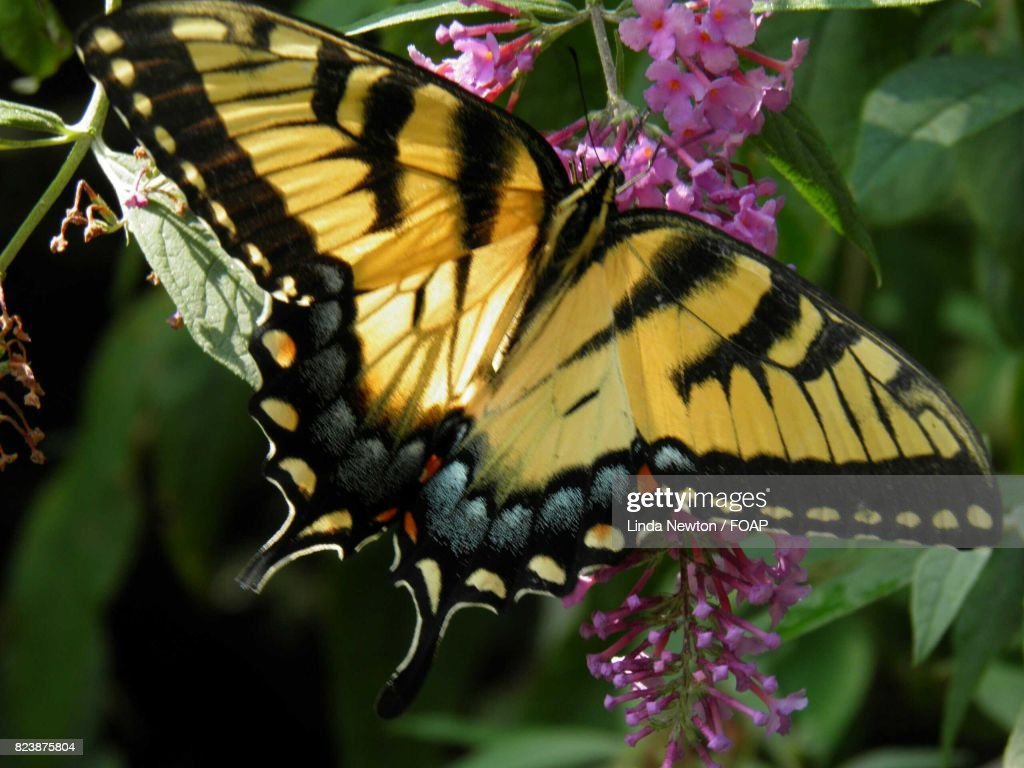 high angle view of butterfly on flower stock photo getty images
