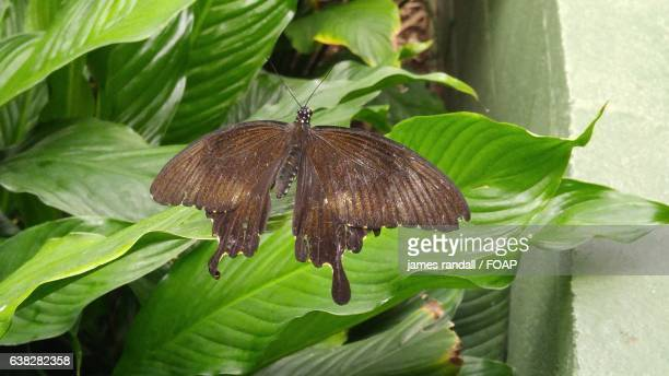 High angle view of butterfly on leaves