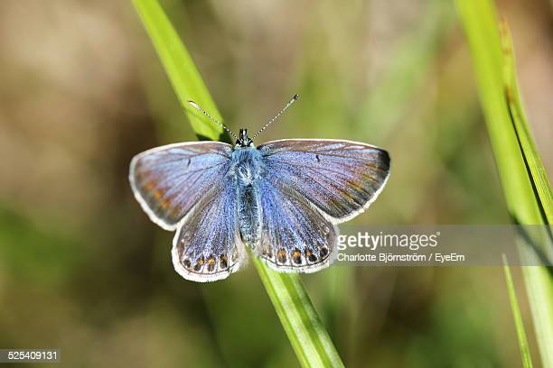 High Angle View Of Butterfly
