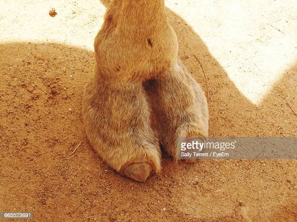 High Angle View Of Camel Toe