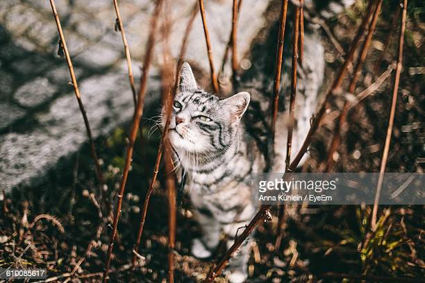 High Angle View Of Cat By Plant On Field