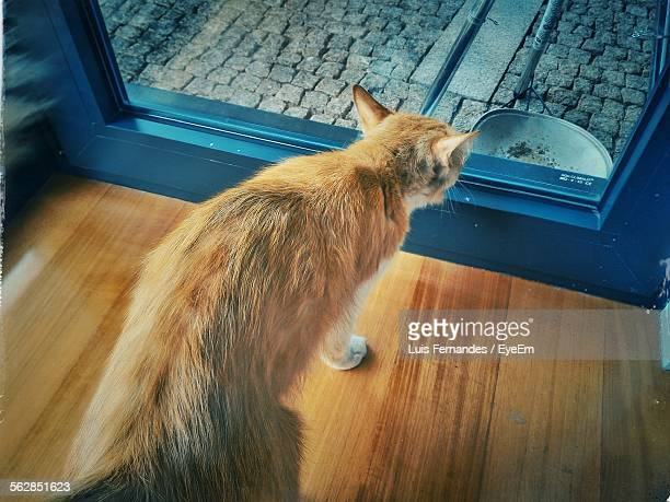 High Angle View Of Cat Looking Through Glass Door