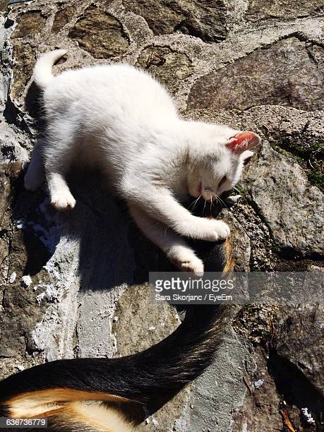 High Angle View Of Cat Playing With Dog Tail