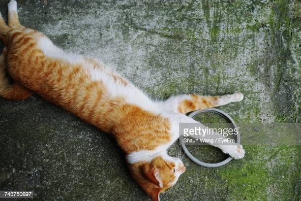 High Angle View Of Cat Relaxing On Weathered Floor