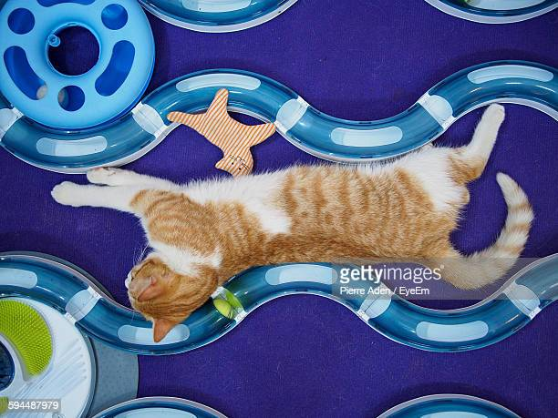 High Angle View Of Cat Resting With Toys On Floor