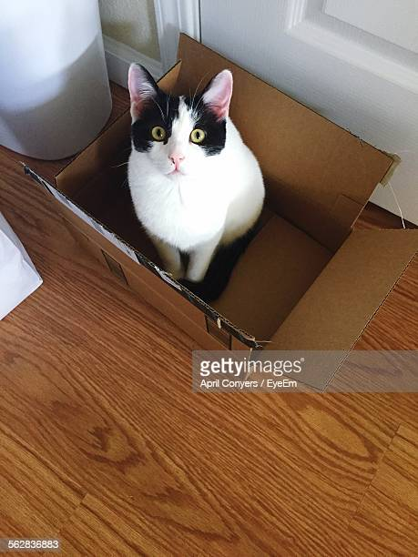 High Angle View Of Cat Sitting In Cardboard Box