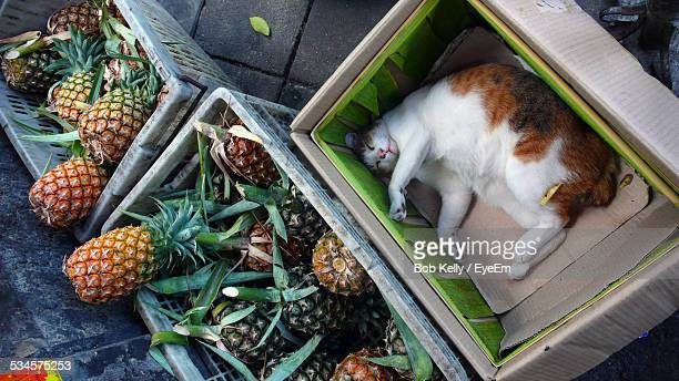 High Angle View Of Cat Sleeping In Cardboard Box By Pineapples Basket In Market