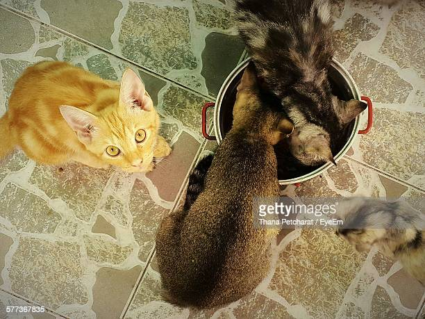 High Angle View Of Cats Drinking Water From Container At Home