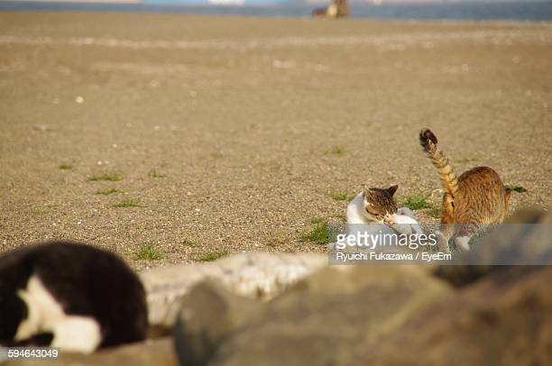 High Angle View Of Cats On Beach
