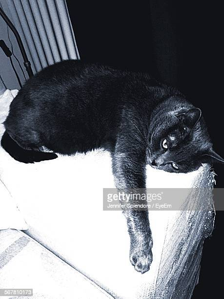 High Angle View Of Chartreux Relaxing On Bed At Home