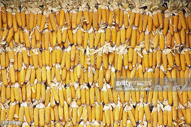 High Angle View Of Corns On Field