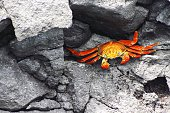 High Angle View Of Crab On Rocks