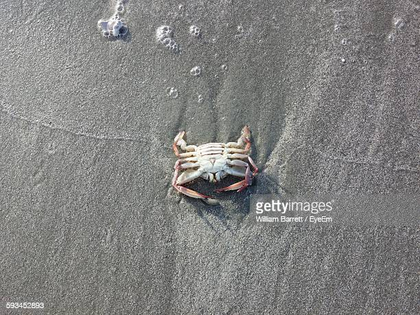 High Angle View Of Crab On Sand At Beach