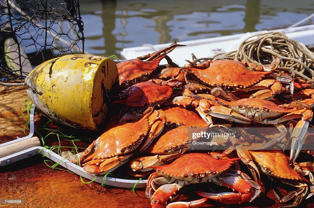 High angle view of crabs annapolis maryland usa stock for Md fishing license cost