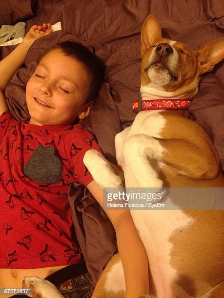 High Angle View Of Cute Boy Lying With Basenji On Bed While Smiling