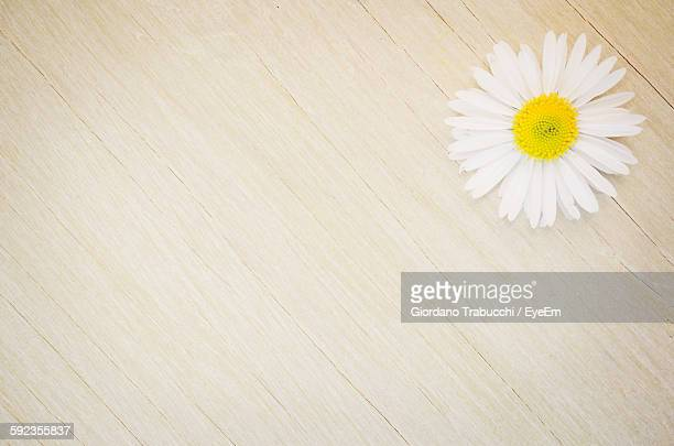 High Angle View Of Daisy On Wooden Table