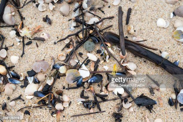 High Angle View Of Dead Animals And Twigs On Sand At Beach