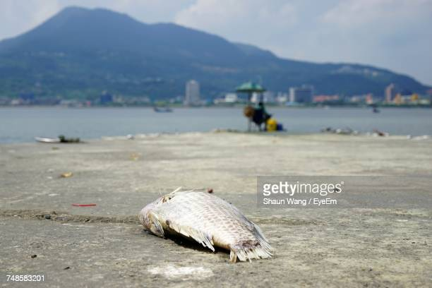 High Angle View Of Dead Fish At Beach By Sea Against Mountains