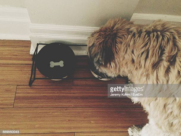 High Angle View Of Dog Eating From Bowl In Home
