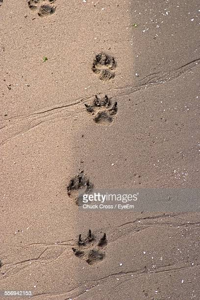High Angle View Of Dog Footprints On Sand