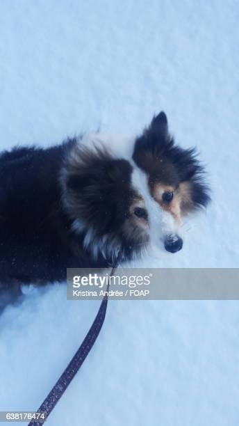 High angle view of dog in snowy weather