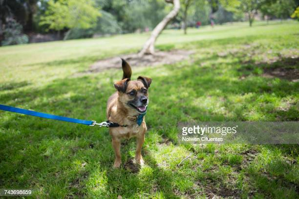 High angle view of dog on grass at park