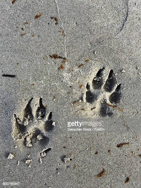 High Angle View Of Dog Paw Prints On Sandy Beach