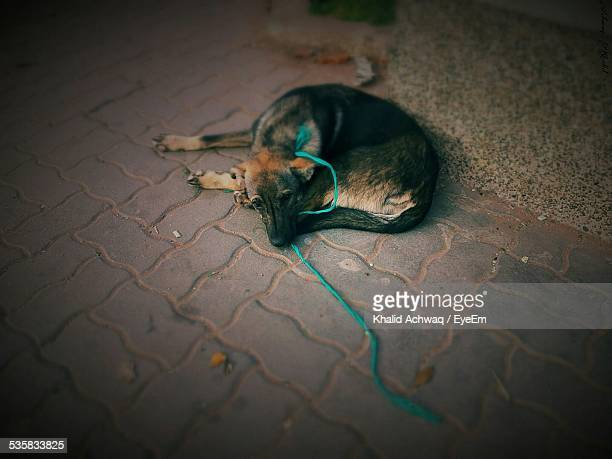 High Angle View Of Dog Relaxing On Sidewalk