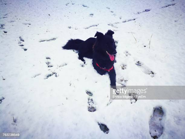 High Angle View Of Dog Resting On Snow Covered Field