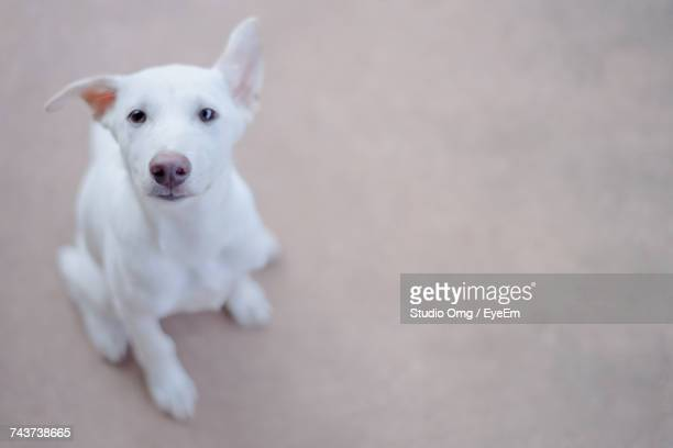 High Angle View Of Dog Sitting On Footpath