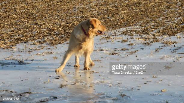 High Angle View Of Dog Standing On Frozen Lake