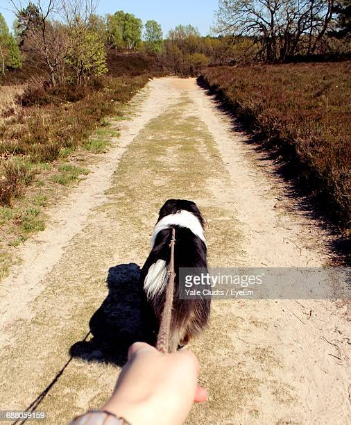 High Angle View Of Dog Walking On Dirt Road Amidst Field