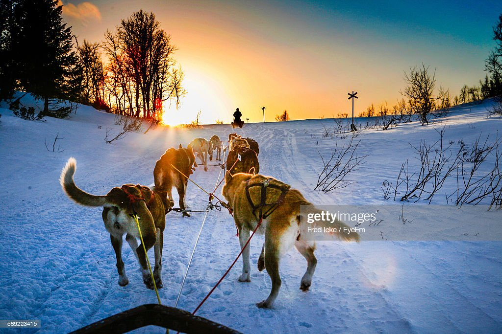 High Angle View Of Dogs On Snow Covered Field