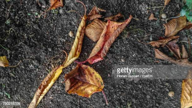 High Angle View Of Dry Fallen Autumn Leaves