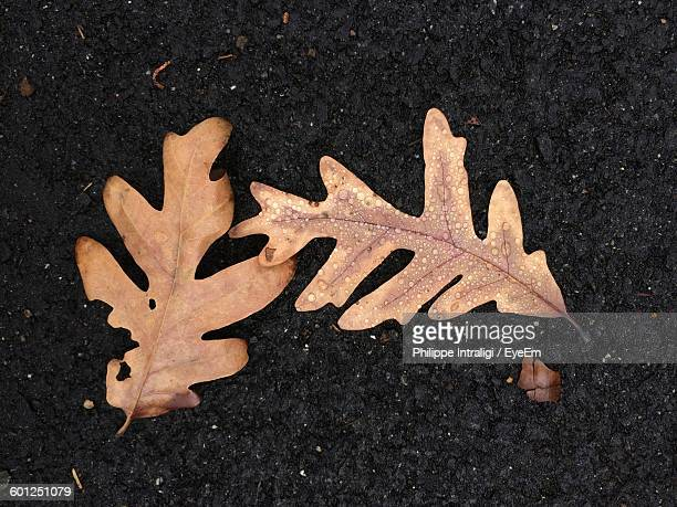 High Angle View Of Dry Leaves On Street