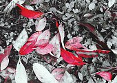 High Angle View Of Dry Red Leaves On Field During Autumn