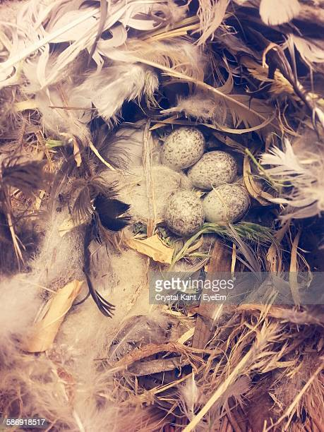 High Angle View Of Eggs In Nest With Feathers