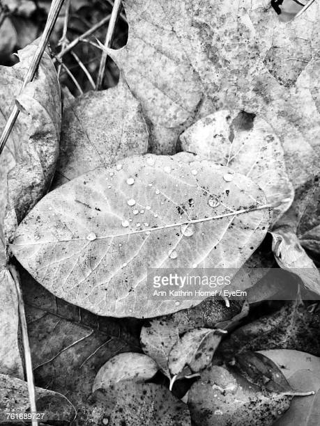 High Angle View Of Fallen Dry Leaf