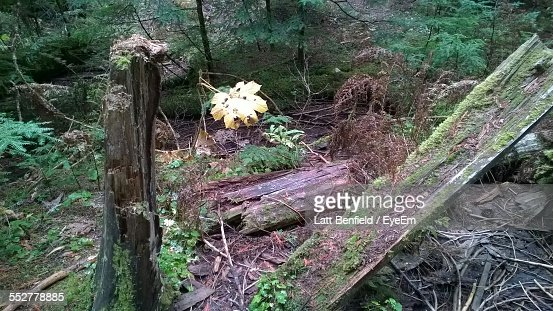 High Angle View Of Fallen Tree In Forest