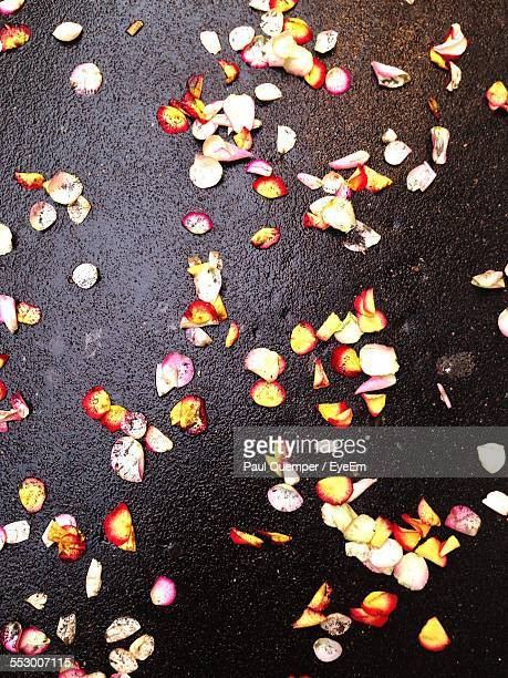 High Angle View Of Falling Flower Petals