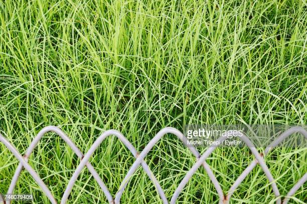 High Angle View Of Fence And Grassy Field