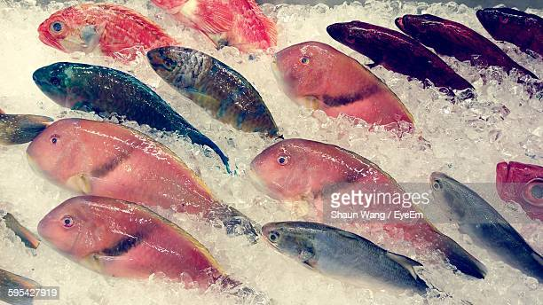 High Angle View Of Fishes Arranged For Sale At Market