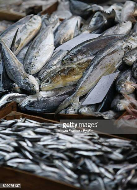 High Angle View Of Fishes In Crates For Sale At Market