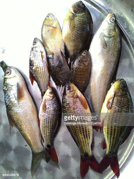 High Angle View Of Fishes In Plate