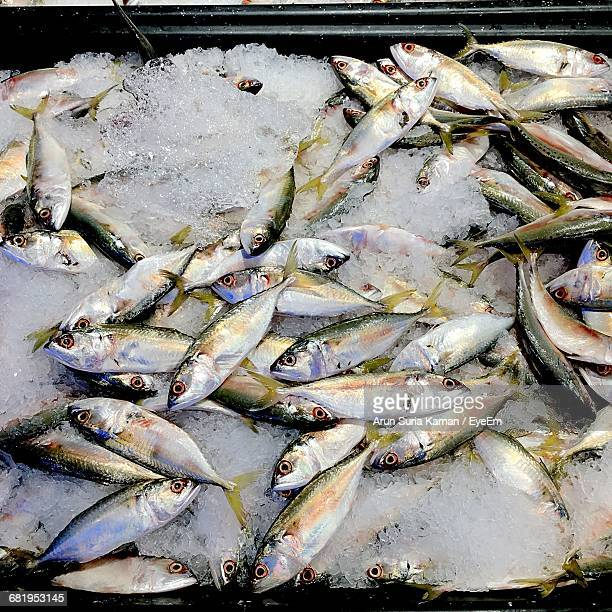 High Angle View Of Fishes On Ice