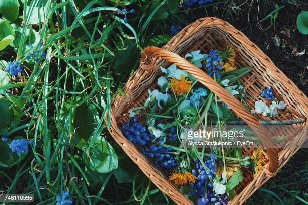 High Angle View Of Flowers In Basket On Field