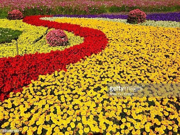 High Angle View Of Fresh Flowerbed In Garden