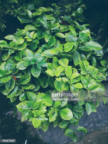 High Angle View Of Fresh Green Plants In Water